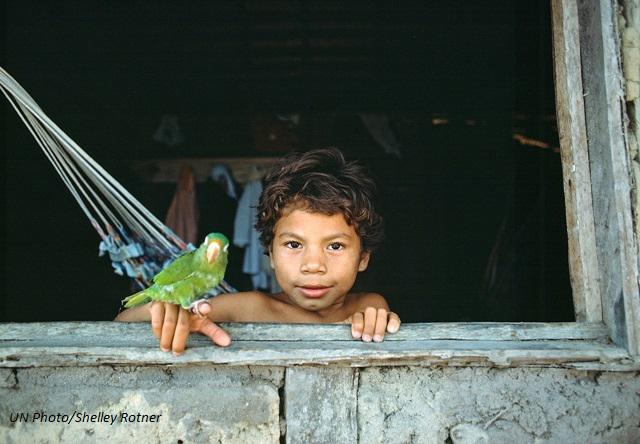 Brazil-bird